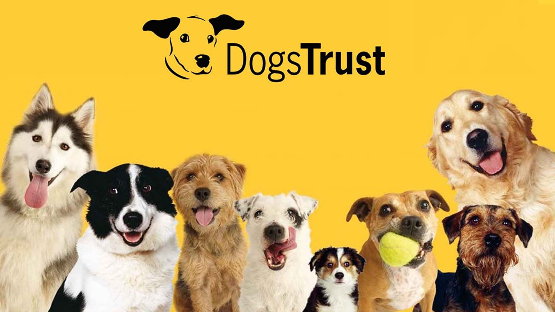With the Dogs Trust You can show your love for just £1 a week