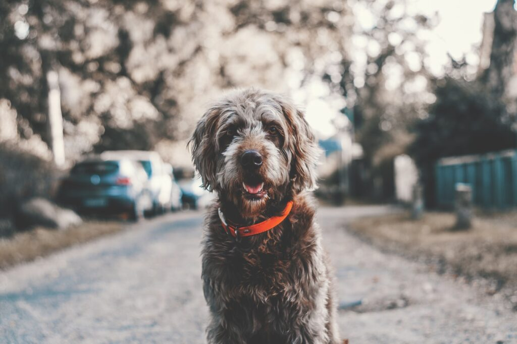 Dog Groomer Green Street Green