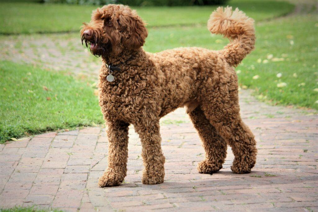 Dog Groomer in Shirley