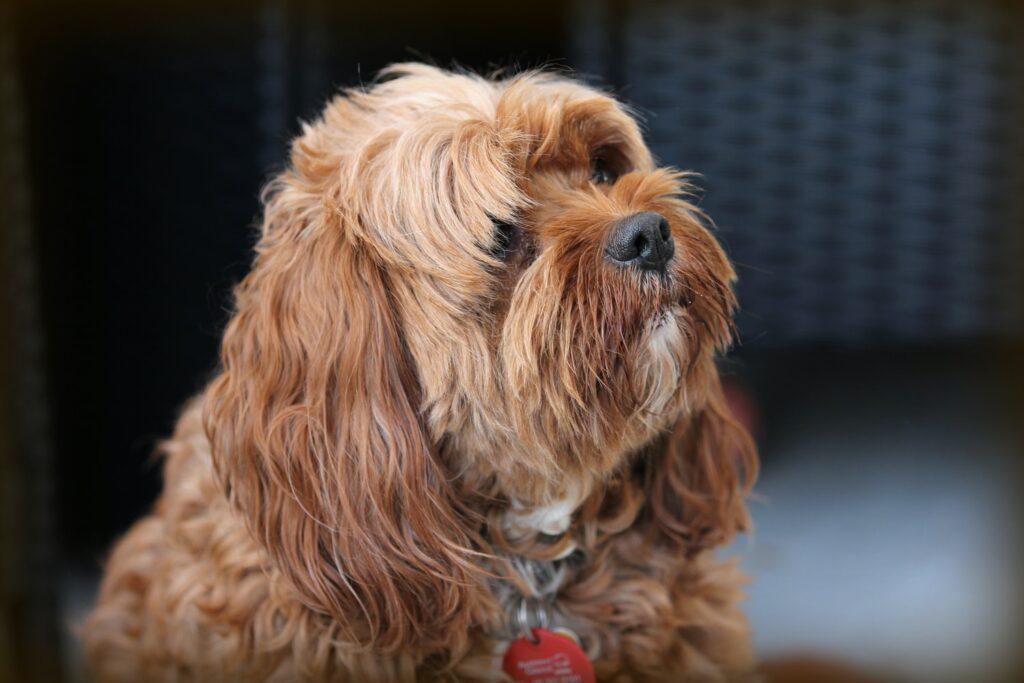 Dog Grooming in Mottingham