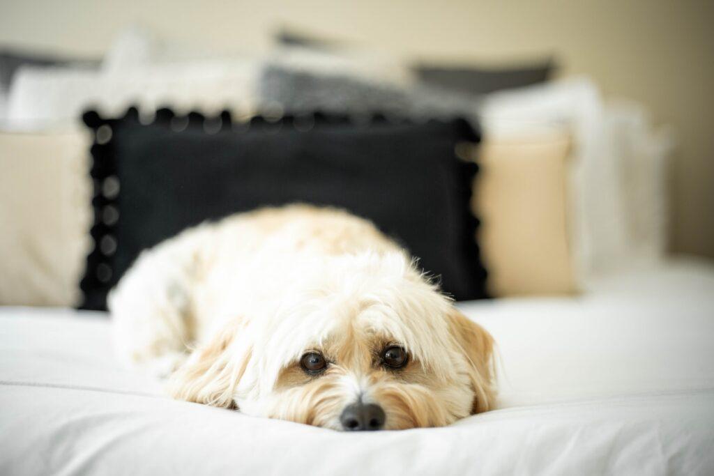 Dog Grooming in Shirley