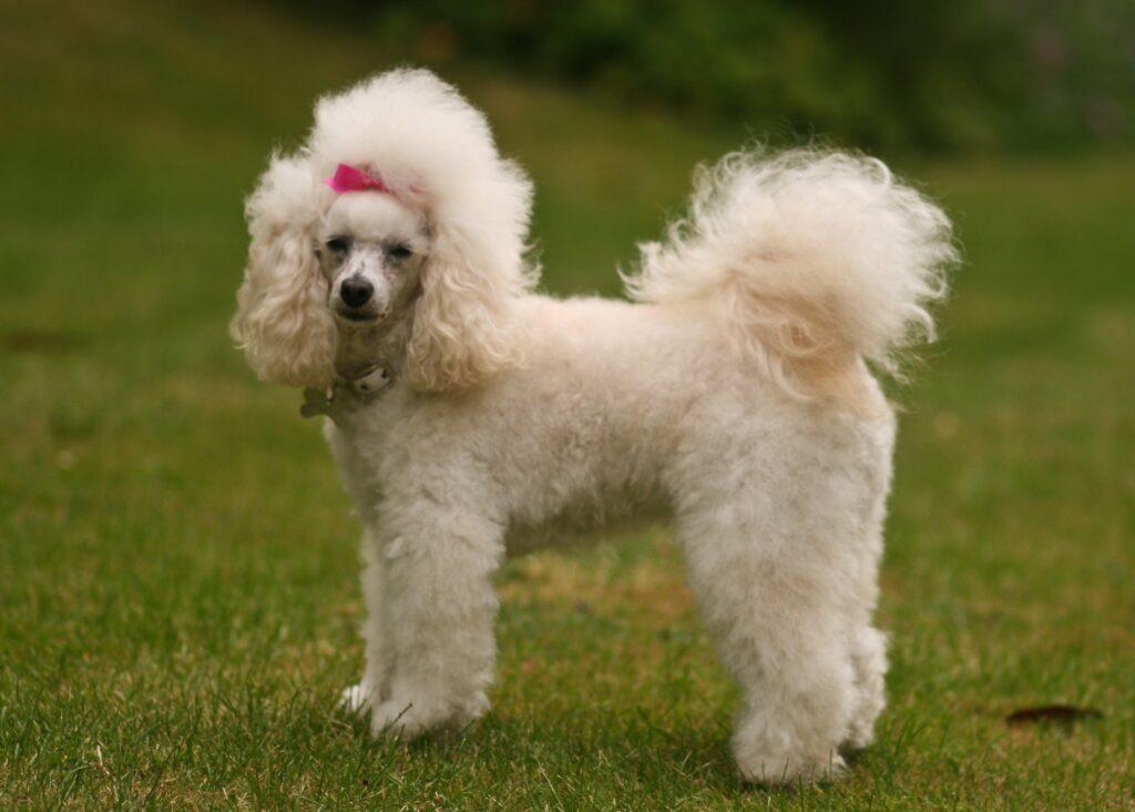Dog Grooming Farnborough Park