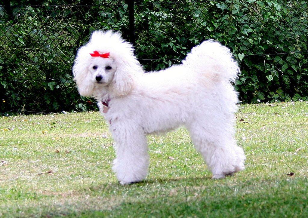 dog grooming oprington