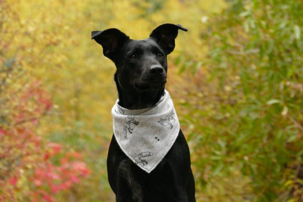Mobile Dog Groomer Chislehurst