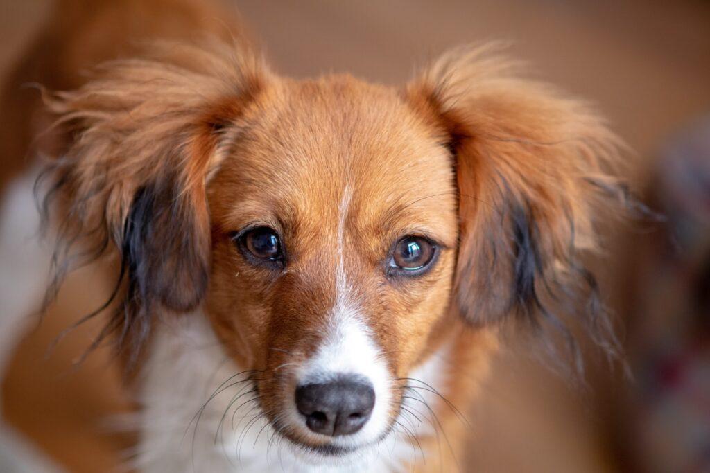 Mobile Dog Groomer Downe Kent