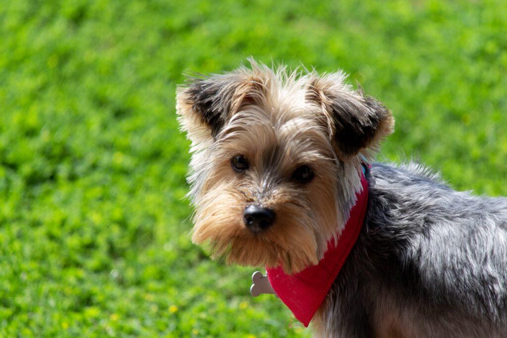 Mobile Dog Grooming Chislehurst