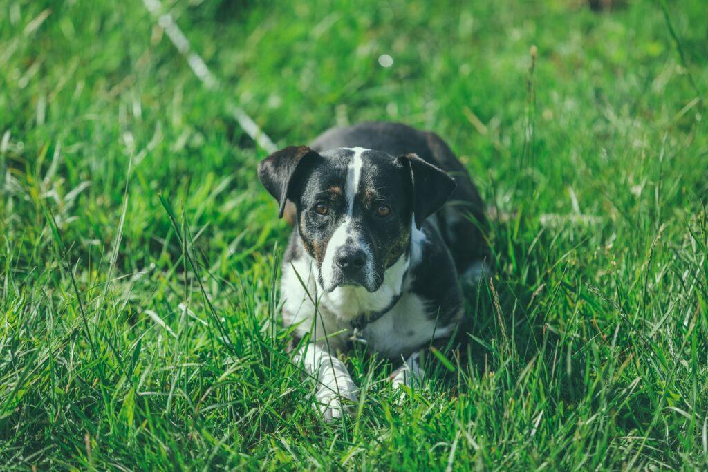 Mobile Dog Grooming Downe Kent