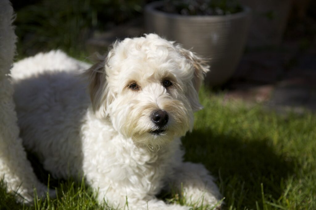 New Addington Dog Groomer