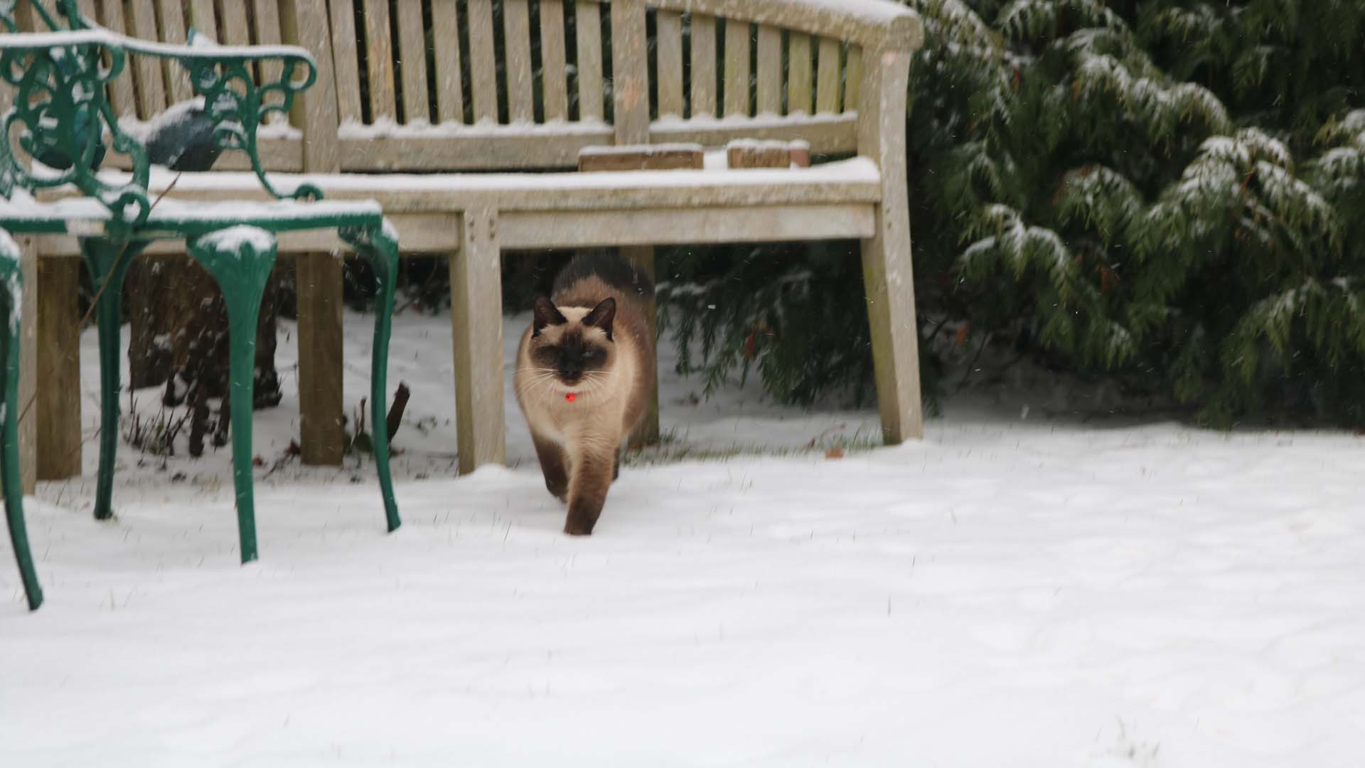 Beauty enjoying the snow