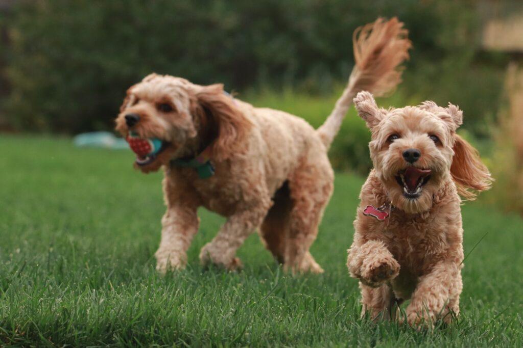 dog groomer BR1 Bromley