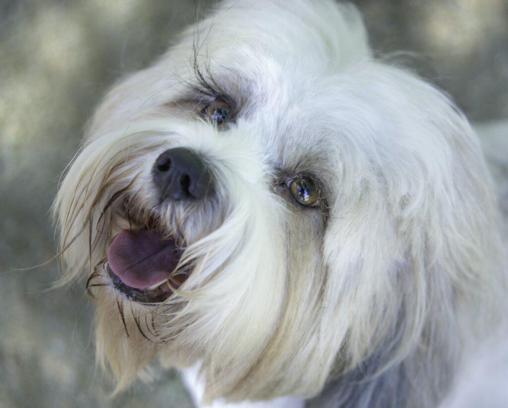 dog groomer BR6 Bromley