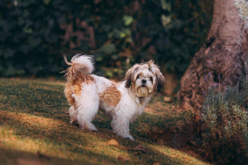 dog groomer elmstead wood