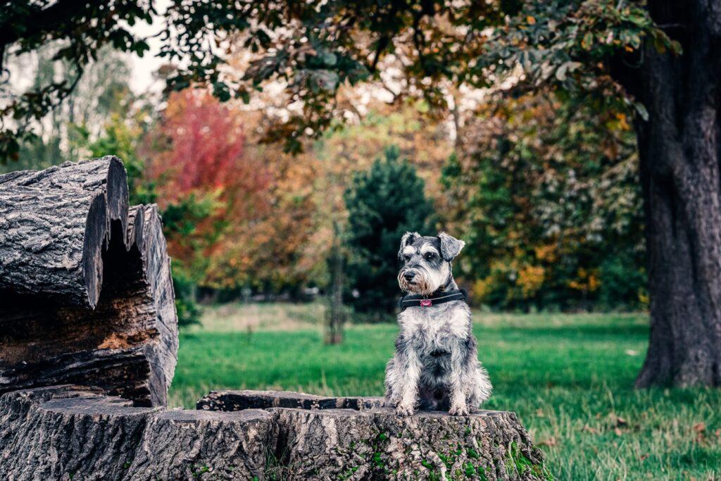 dog grooming hayes bromley