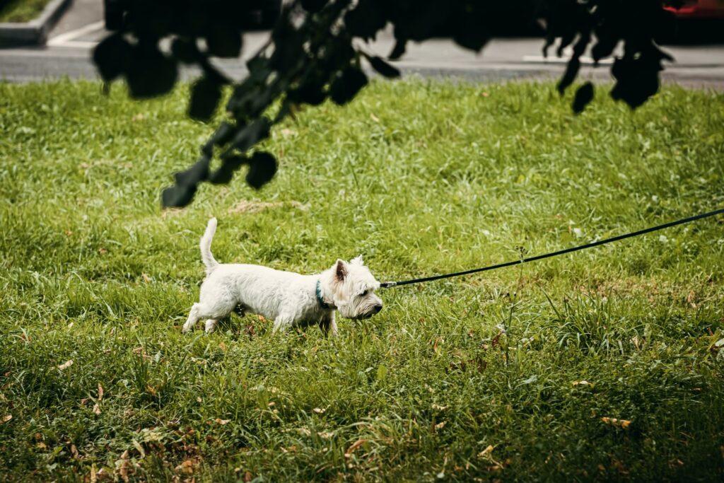 Dog Grooming in Biggin Hill Kent