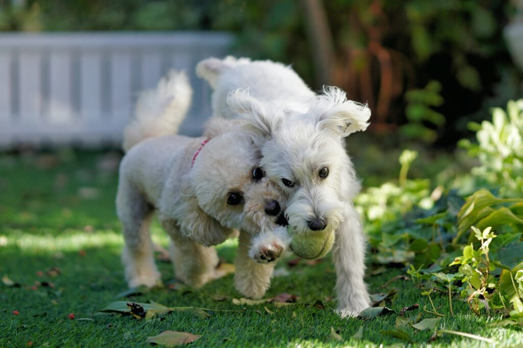 dog grooming locksbottom