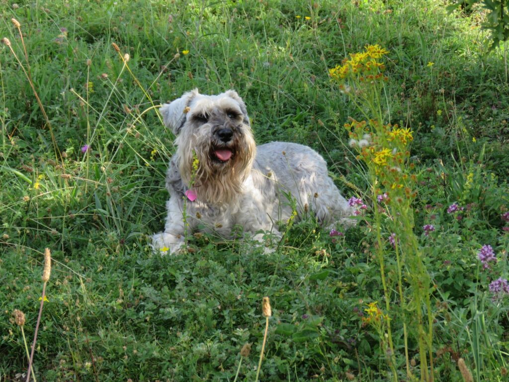 dog grooming shortlands bromley