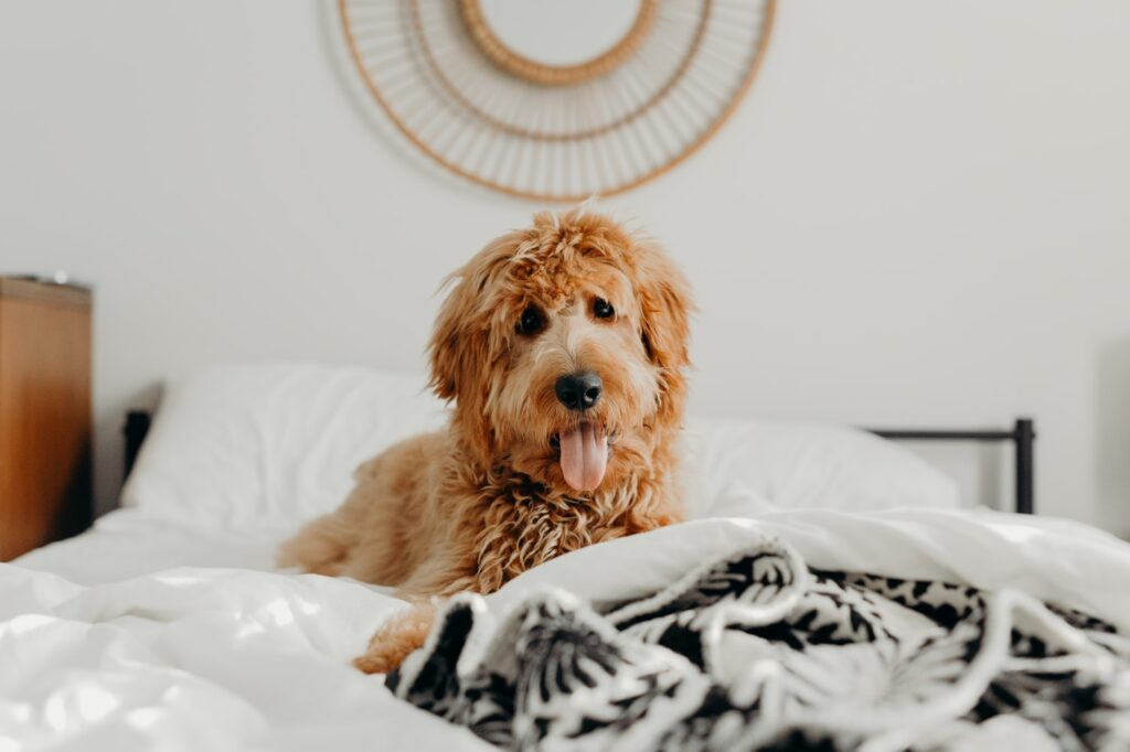 dog groomer swanley