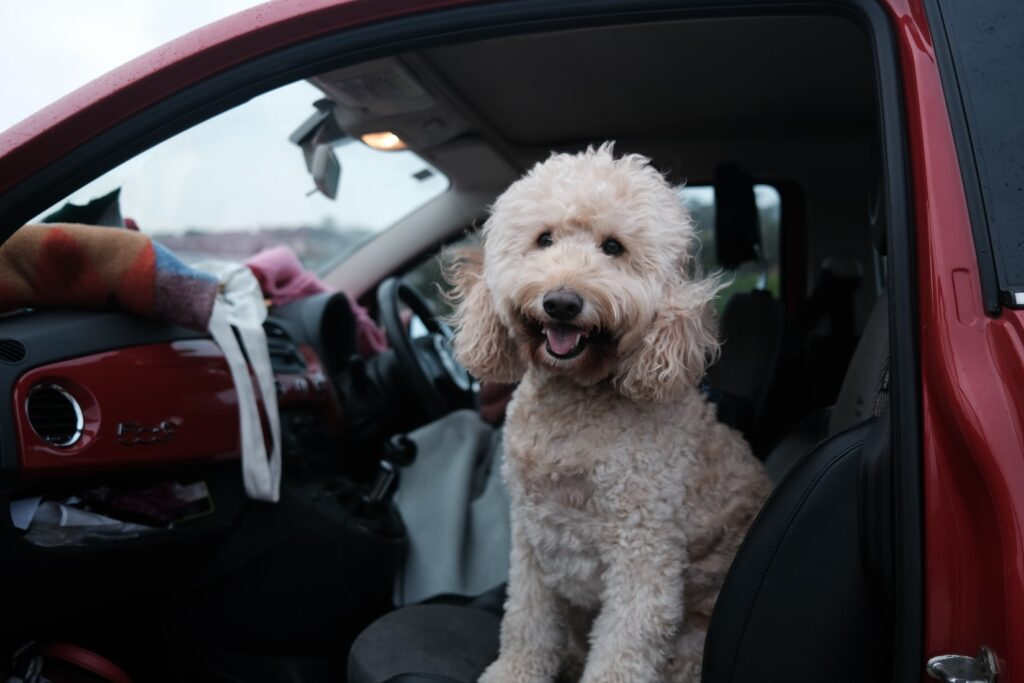 dog in car dog grooming bromley
