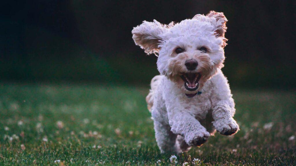 dog grooming bromley orpington