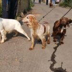 Police find 49 stolen dogs at site in Bromley