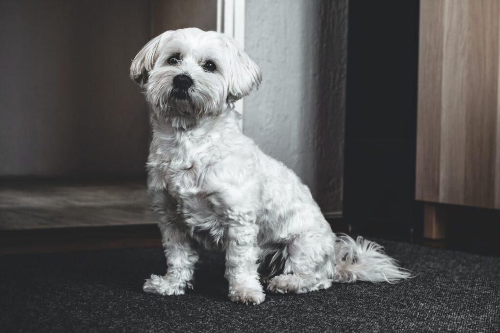 Dog Grooming Ruxley BR5