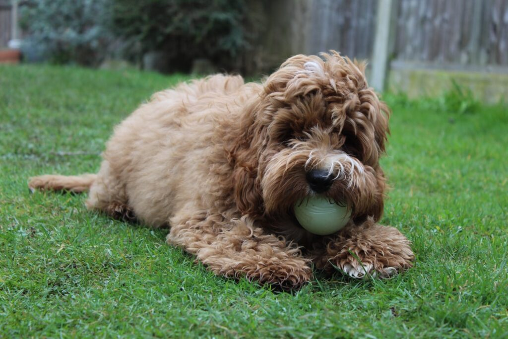 Dog Grooming near Leaves Green Bromley